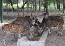 Deer Park 2