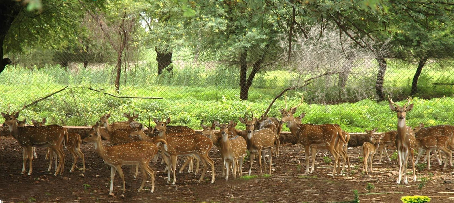 Deer Park 3