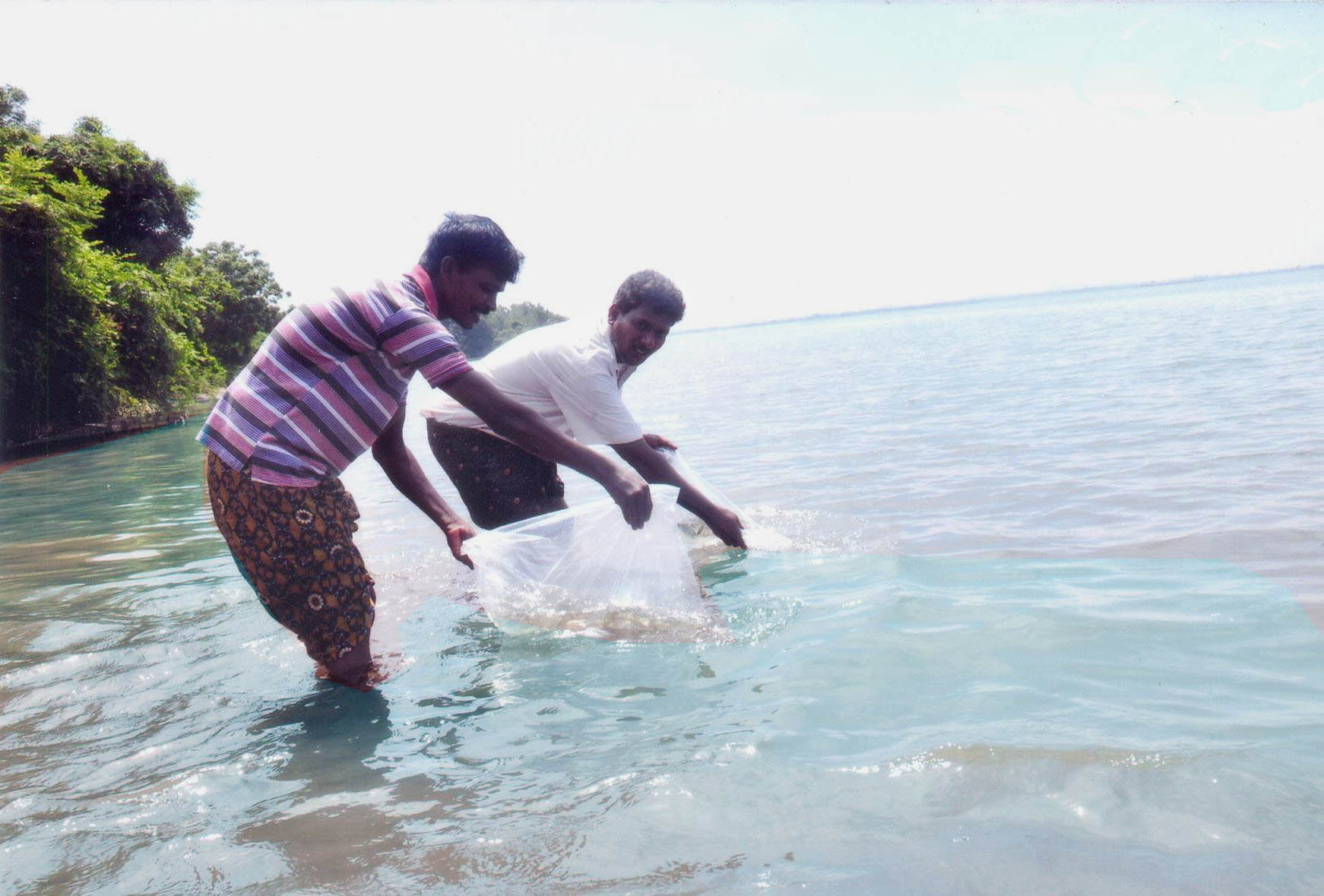 Releasing Fish Seeds To Tb Reservoir